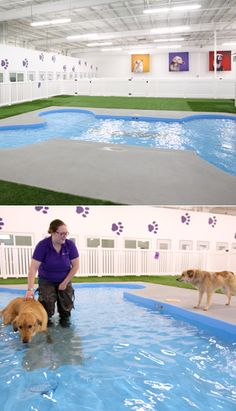 I Love this!   SOLD OUT | Paradise 4 Paws Pet Resort | Photos: Claire McCormack for DailyCandy