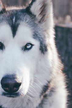 Loki est un adorable chien-loup parti à l'aventure avec son maître, Kelly Lund. Grâce aux réseaux sociaux, les deux amis partagent leurs sensations, leurs ressentis avec le monde. Kelly voulait montrer à quel point les chiens ne sont pas faits ...