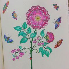 Mais um... ♡ #jardimsecretotop #jardimsecreto #antiestresse #amandocadavezmais #nossojardimsecreto #livrodecolorir
