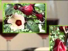 TV shopping giới thiệu các sản phẩm Hibiscus  http://www.youtube.com/watch?v=tkePERMljZY