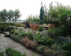 Roof Garden planted with dwarf varities