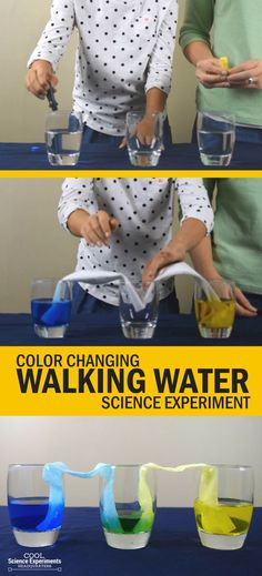 olor Changing Walking Water Experiment using 4 common items. Watch water move from one glass to another & change color in the process. Science Experiments Videos, Kindergarten Science Experiments, Easy Science Experiments, Science Fair Projects, Science For Kids, Blue Food Coloring, Coloring For Kids, Walking Water Experiment, Daycare Games