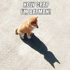 Unless you can be batman. Then be [BATMAN] Funny Animal Jokes, Funny Dog Memes, Really Funny Memes, Cute Funny Animals, Funny Animal Pictures, Animal Memes, Cute Baby Animals, Funny Cute, Funny Dogs