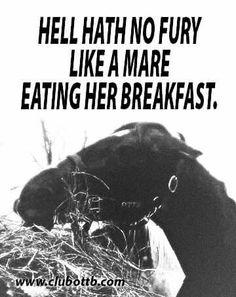 Hell hath no fury like a mare