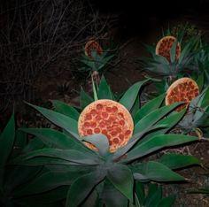 Pizza in seiner freier Wildbahn.   49 Fotos, die dich ratlos zurücklassen, wie bisher nichts in deinem Leben