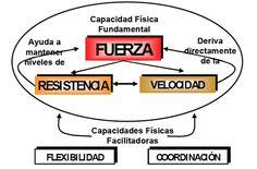 Planificación, Programación y Periodización de la Hipertrofia - Entrenamiento de la Fuerza y Potencia | G-SE