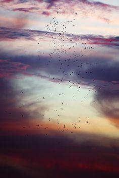 Storks In A Storm (Etosha, 2013) by Yathin S Krishnappa