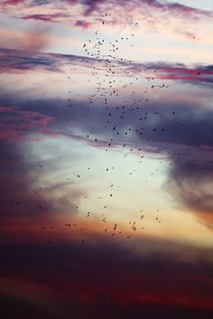 Art is to console | Storks In A Storm (Etosha, 2013) by Yathin S...