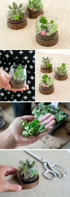 For my succulent addiction. Wood Base Terrariums. Perfect if your house is tight on space or a cute eco-friendly wedding favor