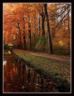 The last leaves, Utrecht, Netherlands