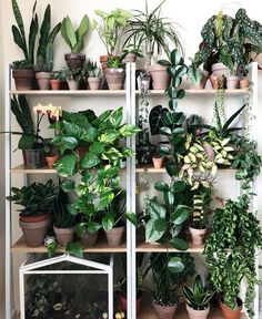 aesthetic plants lidl plants respiration climbing plants for shade plants houseplant Room With Plants, House Plants Decor, Plant Decor, Shade Plants, Cool Plants, Ikea Plants, Outdoor Plants, Garden Plants, Patio Plants