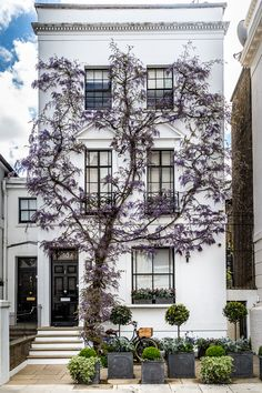 Wisteria is one of the highlights of spring in London. Kensington is a particularly good place to see it. #wisteria #london #kensington #facade #house #flowers