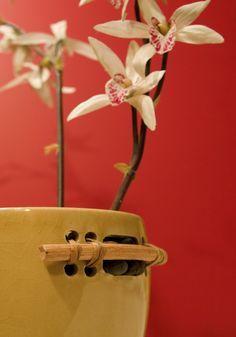 O Feng Shui e as plantas que ajudam na energia da casa.