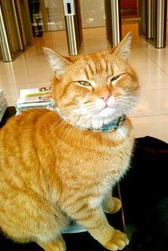This is a cat smiling: Bob is smiling I Love Cats, Crazy Cats, Cool Cats, A Cat Named Bob, Bobcat Pictures, Street Cat Bob, Gatos Cats, Orange Tabby Cats, Tier Fotos