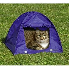 Are you camping, too?