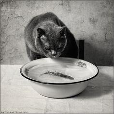 photo: Fisher Cat | photographer: Andy Prokh | WWW.PHOTODOM.COM