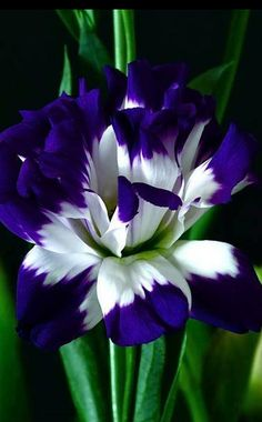 Beautiful..... Flores - Blog Pitacos e Achados - Acesse…