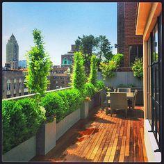 Upper East Manhattan deck Boxwood planters