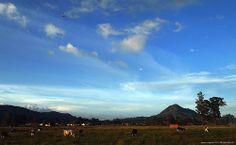 Potreros. Cerro Capiro, La Ceja Antioquia