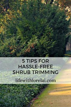 Shrubs - 5 Hassle-Free Trimming Tips with Megan Wild. Find great advice to keeping your shrubs healthy and beautiful. #Shrubs #Gardening #Trimming #Yard