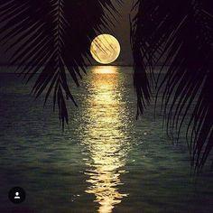 Night nite.  Beautiful photo by @golden_heart  #picoftheday #moon #night #travel #trip #love #night #sea #ocean #bestoftheday #vacation #photooftheday #beautiful #repost #regram #beach #love #wonderful_places #escape #beautifuldestinations #holiday