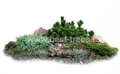 Модули Herbs, Plants, Ales, Decor, Garden Ideas, Decoration, Decorating, Yard Ideas, Plant