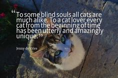 To some blind souls all cats are much alike. To a cat lover every cat from the beginning of time has been utterly and amazingly unique. Jenny de Vries #dogs #cats