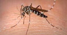 Η θερμοκρασία έχει ανέβει και τα κουνούπια κάνουν αισθητή την παρουσία τους τα βράδια του καλοκαιριού. Τα τελευταία χρόνια στην Ελλάδα αντιμετωπίζουμε περι