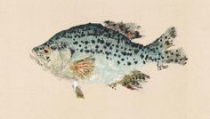 Crappie Gyotaku Fish Rubbing Limited Edition Print by fredfisher