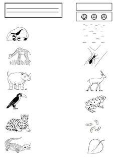 La grenouille à grande bouche - la maternelle de Camille Math, Camille, Albums, Science, French, Education, School, Fle, Frog Activities