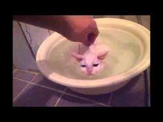 Ласковый кот - YouTube