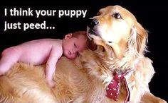 Your puppy peed...
