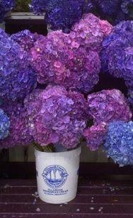 www.wisteria-avenue.co.uk