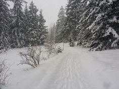 Leise rieselt der #Schnee und hüllt Wald und Wiesen in ein weißes Kleid - jetzt heißt es nichts wie raus und den #Winter beim #Wandern genießen