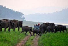 Welcome the New Year with Adventurous Tour in Dhikala Corbett National Park