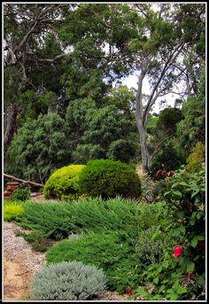 by heatherlss Australian Native Garden, Australian Plants, Australian Bush, Garden Inspiration, Garden Ideas, Landscape Design, Garden Design, Bush Garden, Mercury Marine