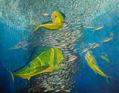Mahi Mahi, Original Oil Painting by Artist Manuel Lopez.  Information available on FineArtAmerica.com