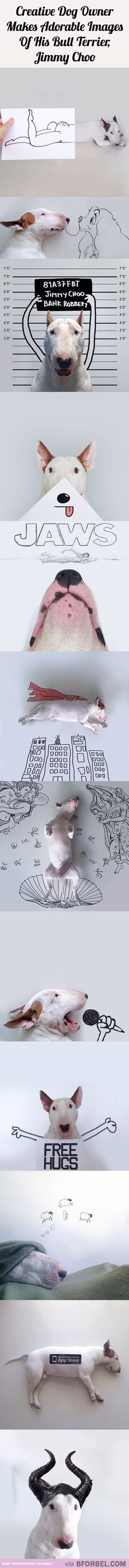 A Man Takes Creatively Adorable Images Of His Dog, Jimmy Choo… Check more at http://hrenoten.com
