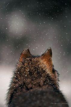 Watching for Deer