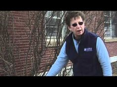 How to Prune a Lilac Bush