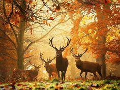 Autumn in the Carpathian Mountains, Ukraine
