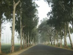 India to plant 2 BILLION trees along highways, creating up to 300,000 jobs for youths    https://spiritegg.com/india-plant-2-billion-trees-along-highways-creating-300000-jobs-youths/