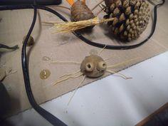 laboratori insetti del bosco