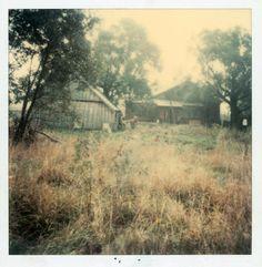 Polaroid by Andrei Tarkovsky Lot 21 - Polaroid 6