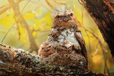 Owl Photography By Thai Photographer Sasi Smith 9