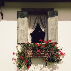 Window box, shutters, curtains. <3