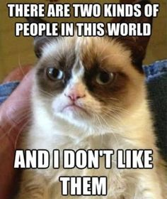 You get an alumni newsletter from your alma-mater. - The 30 Best Grumpy Cat Memes You Can Respond to Emails With | Complex CA