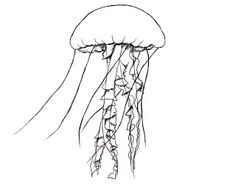 56 Best Underwater Themed Drawings Images Drawings Cute Drawings