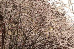 Lehullott+a+hó.+Összevissza+csúszkálunk,+hol+a+latyakban,+hol+a+mélyülő+hóban,+hol+a+kocsik+által+felvert+sárban.+Mit+tehet+ilyenkor+a+honpolgár+saját+egészségéért?+És+a+tavaszi+fáradtság+elkerülésére?+A+földből+semmi+nem+látszik+ki,+de+van+egy+növény,+amit+ilyenkor+is+szüretelhetünk,+és+ráadásul…