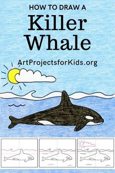 Learn how to draw a Killer Whale with this fun and easy art project for kids. Simple step by step tutorial available. Art Drawings For Kids, Drawing For Kids, Easy Drawings, Art For Kids, Easy Art Projects, Drawing Projects, Projects For Kids, Whale Drawing, Whale Painting
